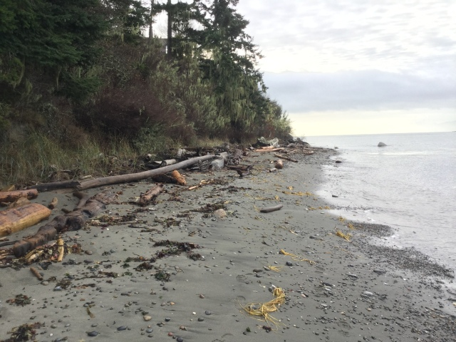 Looking south from the Clure property. Tide is approximately 7.7 feet. December 19, 2016, 11:00a.m.