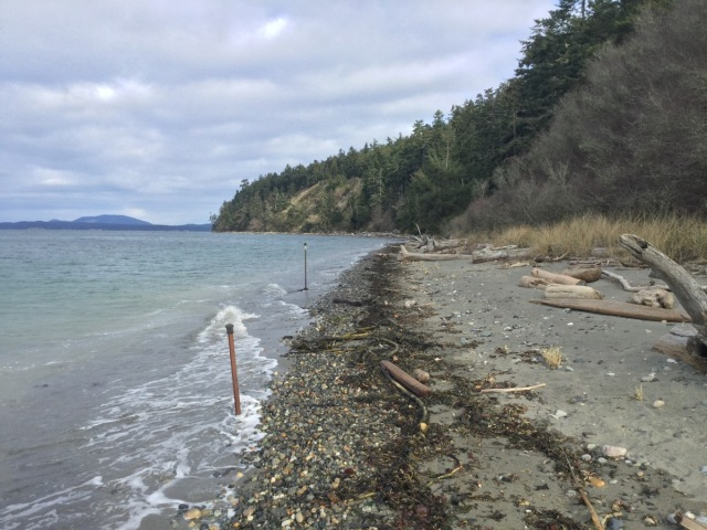 Looking north from Clure shoreline common area. Two marker posts show the corners of Parcels B (foreground) and Parcel A (background). January 6, 2017. Tide approximately 7.5 feet.