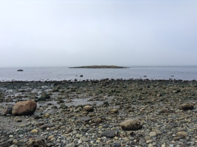 Low tide looking out at Shark Reef Wildlife Refuge. There are at least 30 seals hauled out on the Shark Reef Rocks. Tide approximately 0 feet. May 20, 2015 11:00 am.