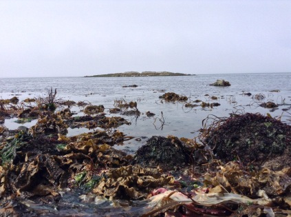 Low tide looking out at Shark Reef Wildlife Refuge. Tide approximately 0 feet. May 20, 2015 11:00 am